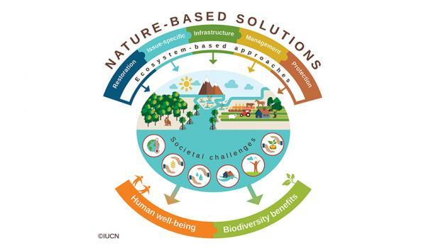 "alt=""Nature based solutions"""