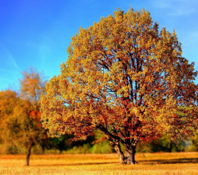 The long tree lifespan