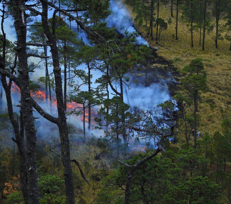 Cambiamenti climatici: metà delle foreste a rischio