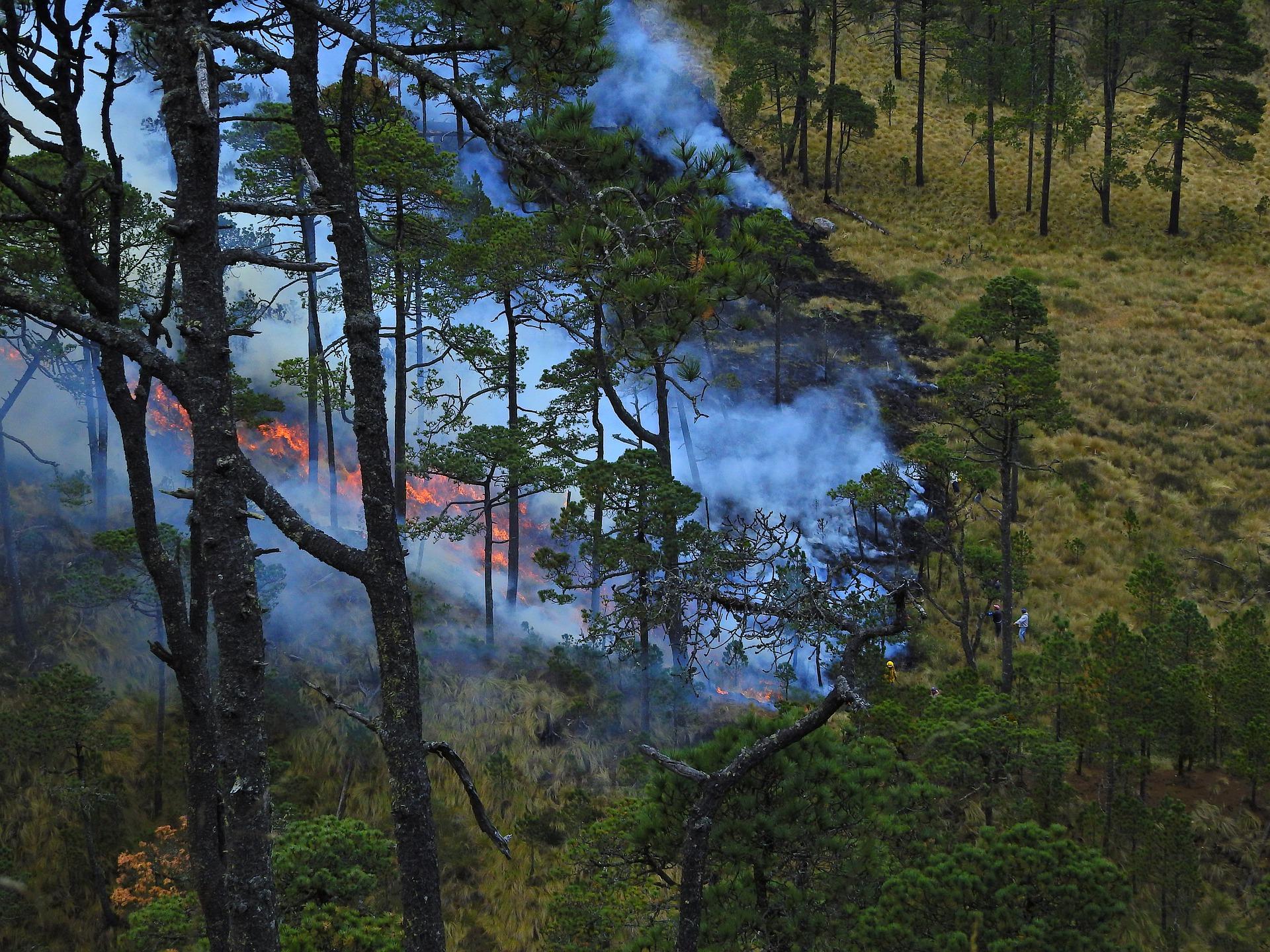 """alt= """"Climate change: half forests in danger"""""""